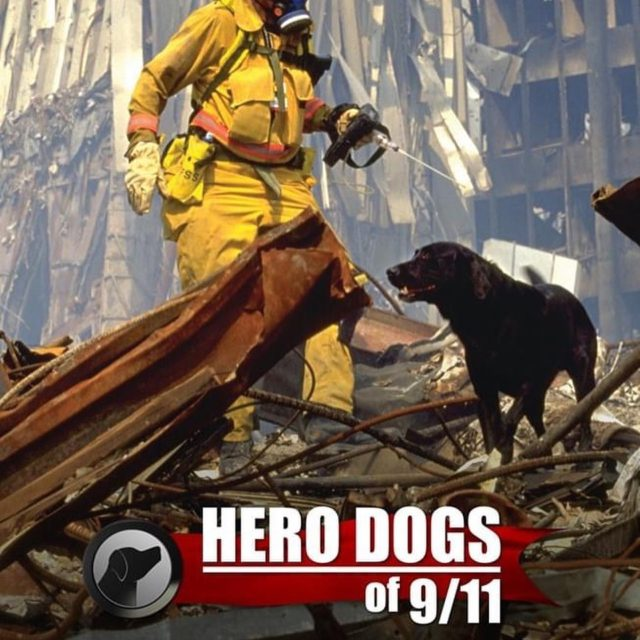 We will never forget this day, it was a day of tragic loss but it was also a day where Americans all came together. The world was with us as brave men and K9's searched for survivors... they risked their lives searching through the rubble. Those lives will never be forgotten, this day will always be a reminder to people that life is so precious and can be gone in a second. Together we stand or divided we fall.... this should be a reminder that we can get through anything if we are united . ❤️🤍💙🇺🇸
